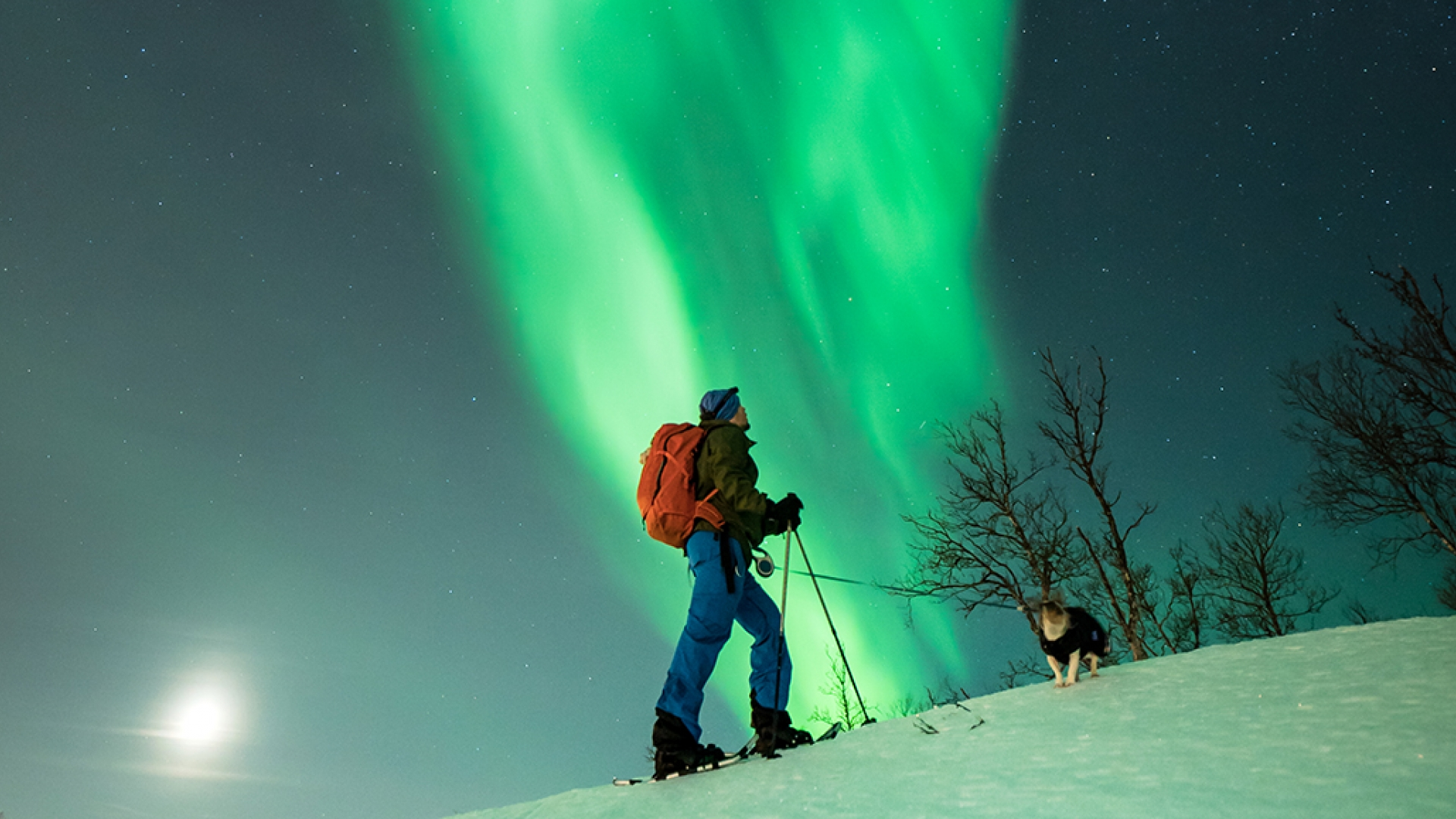 Person snowshoeing with dog under the northern lights
