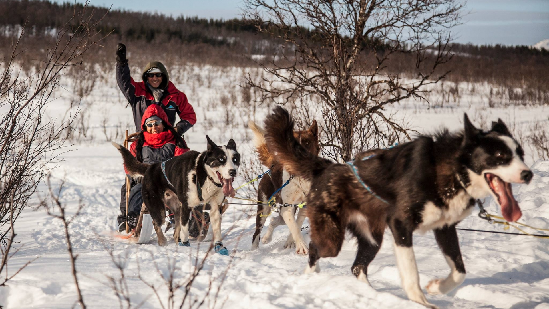 two people dogsledding