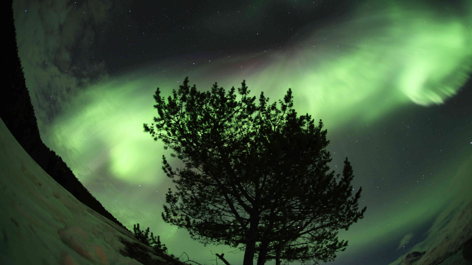 Tree under the Northern Lights