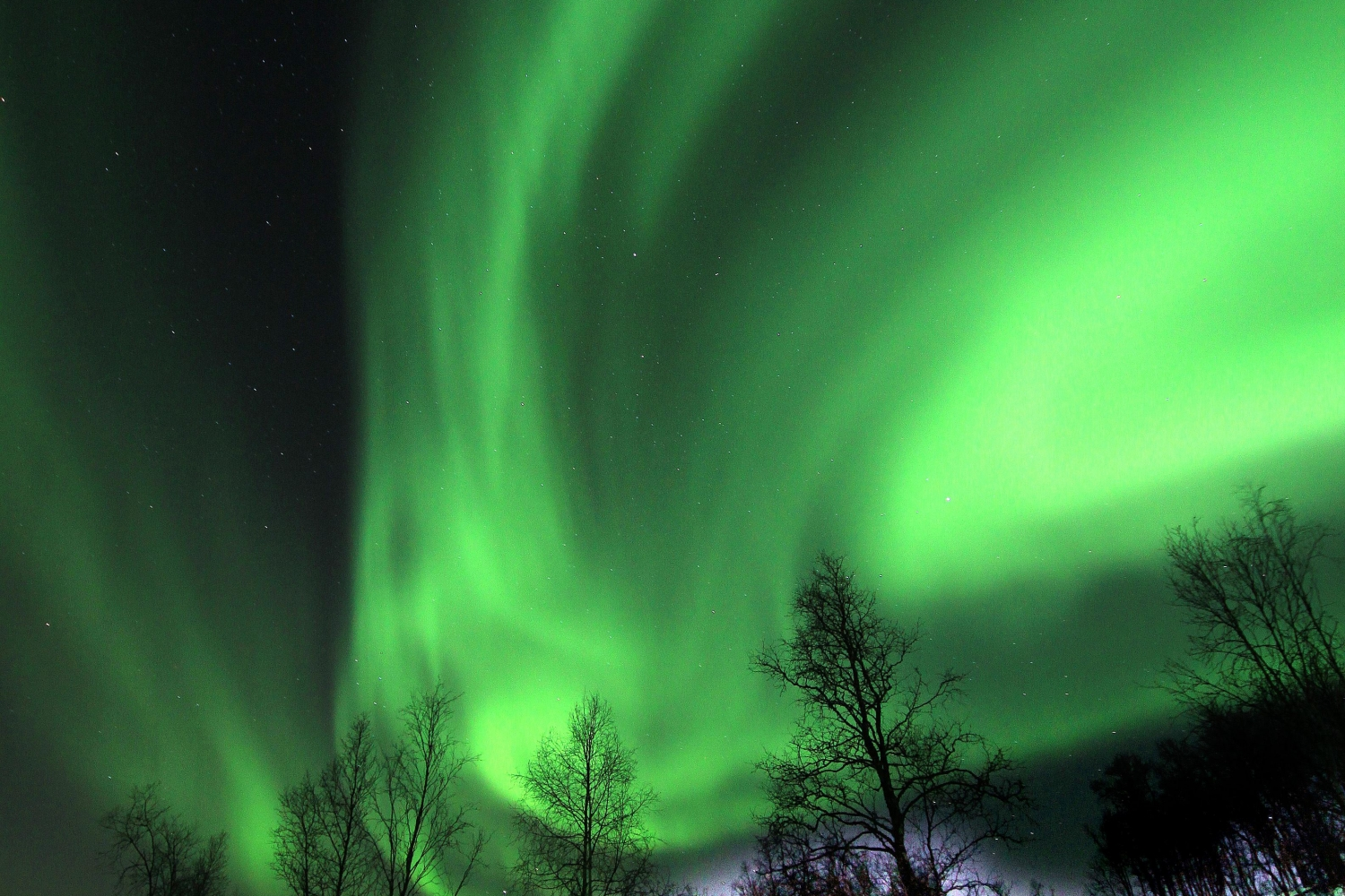 Northern lights over forest