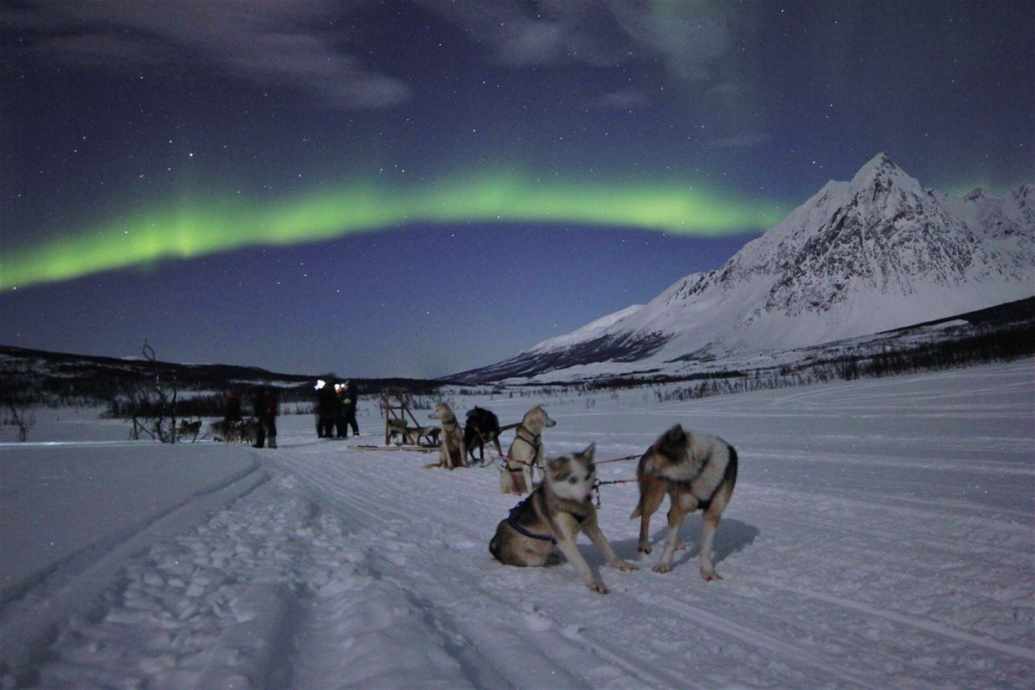 dogs under the northern lights