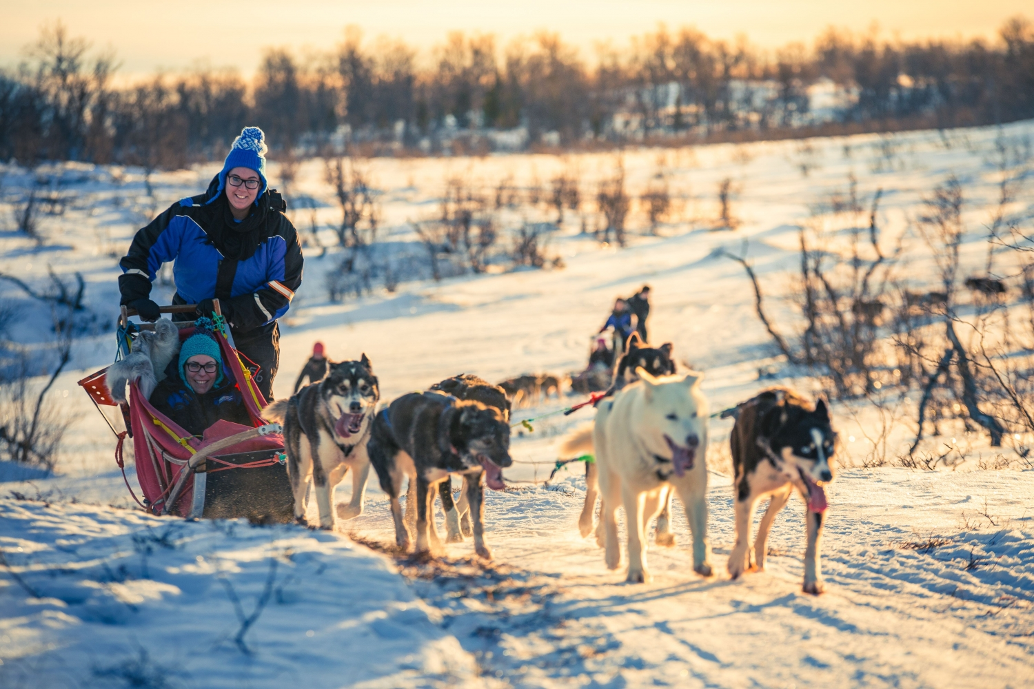 Dog sledding in winter landscape with the sun shining on the snow