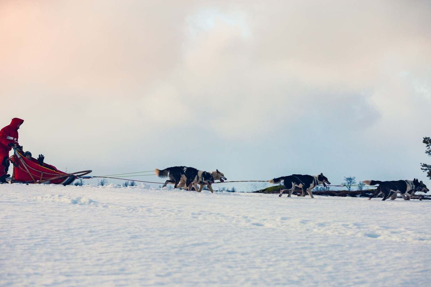 Dog sledding in winter landscape