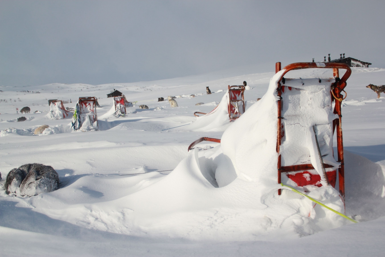 Sleds covered in snow