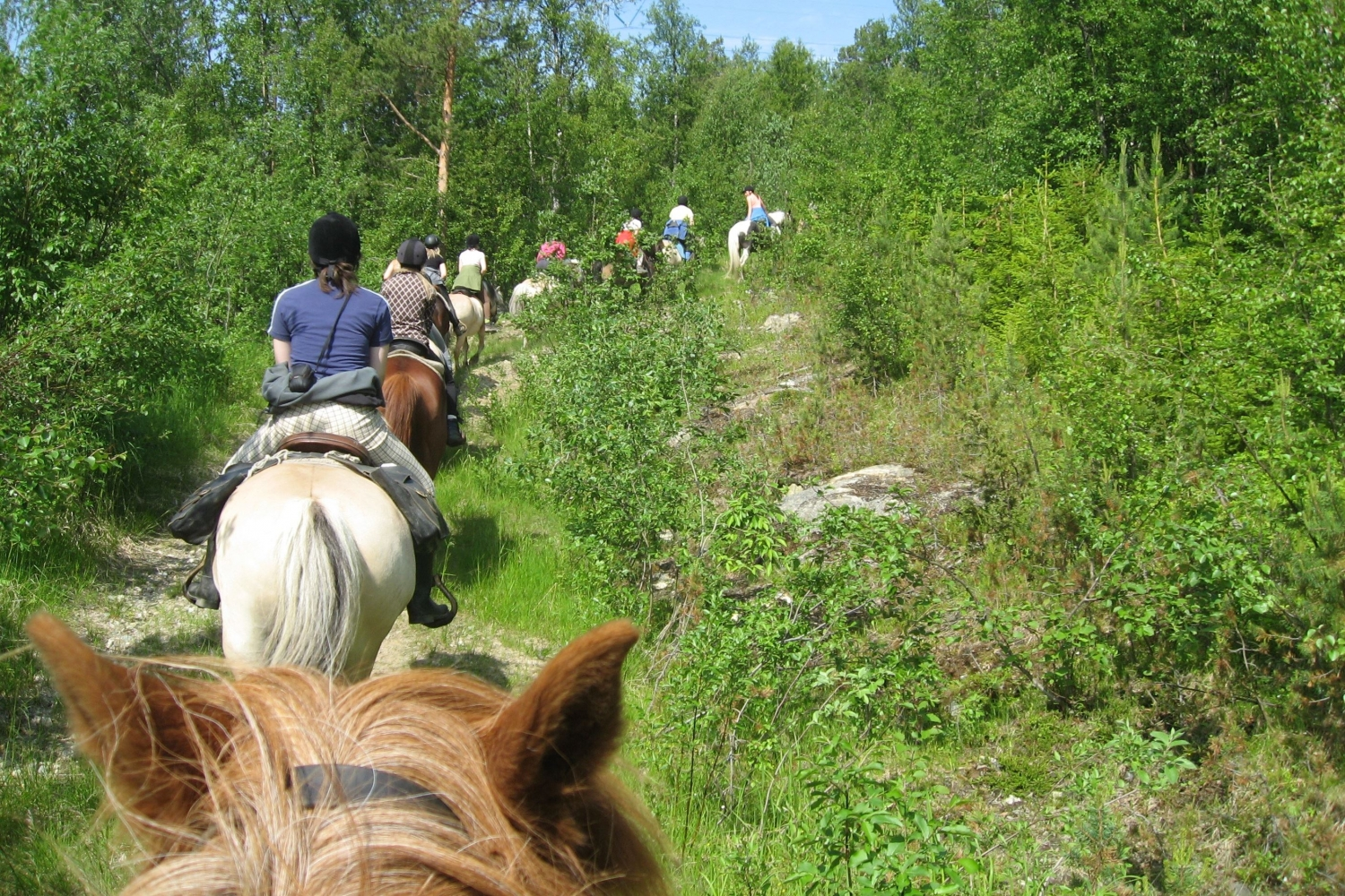 horseback riding in the woods