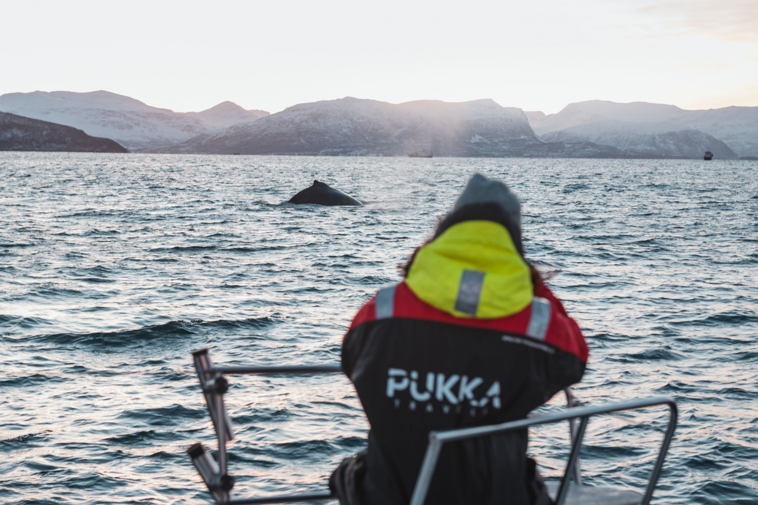 Person watching an orca