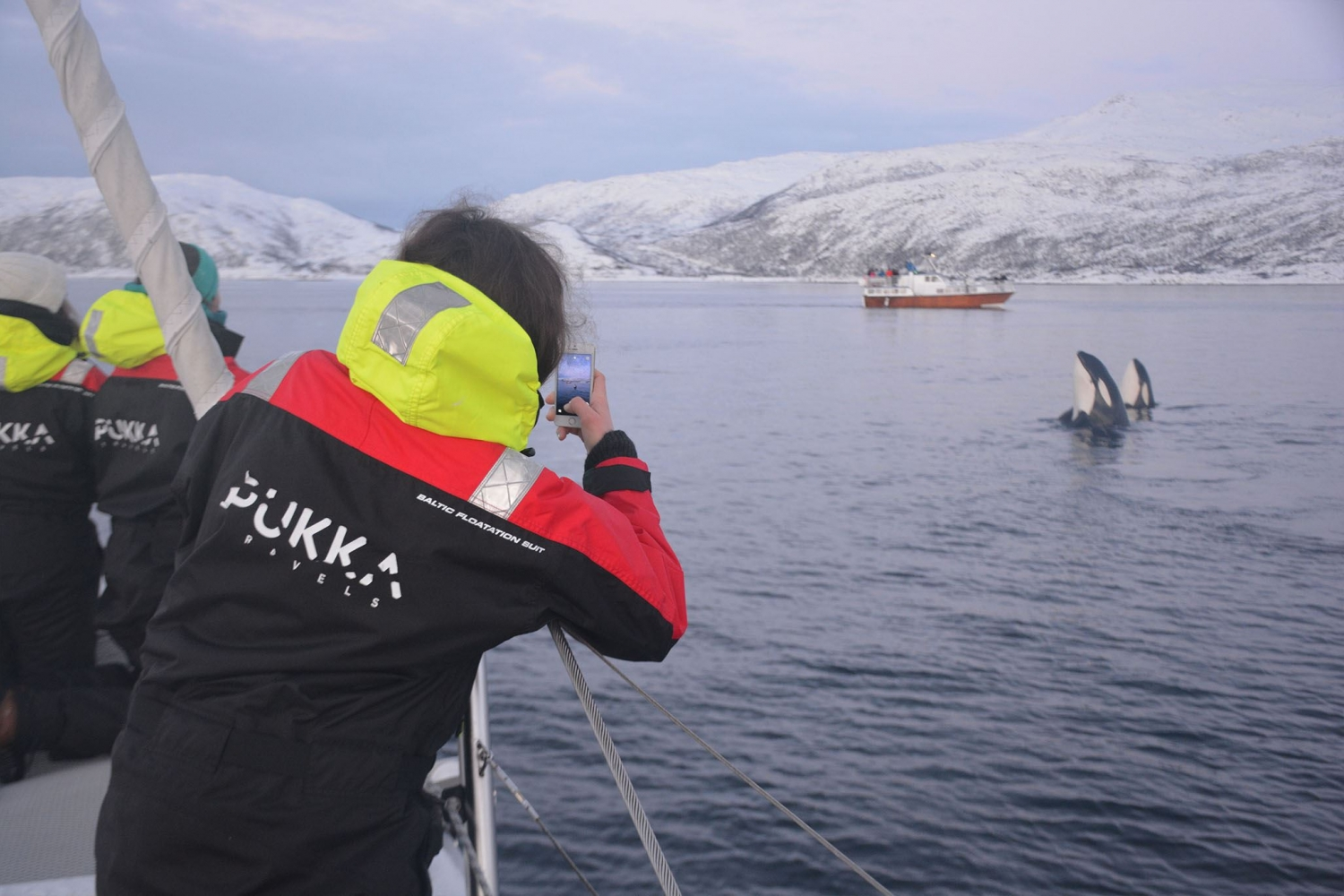 Person photographing an orca with a mobile phone