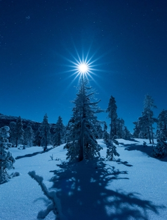 Moonlight above a tree in the Arctic light