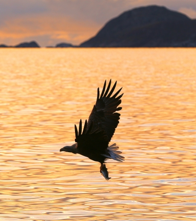 Eagle flying over the ocean
